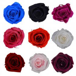 Set 6 trandafiri uni criogenati 5-6 cm