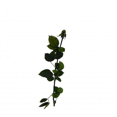 Tulpina pentru trandafiri criogenati