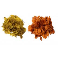 Muschi / licheni vegetali stabilizati mic