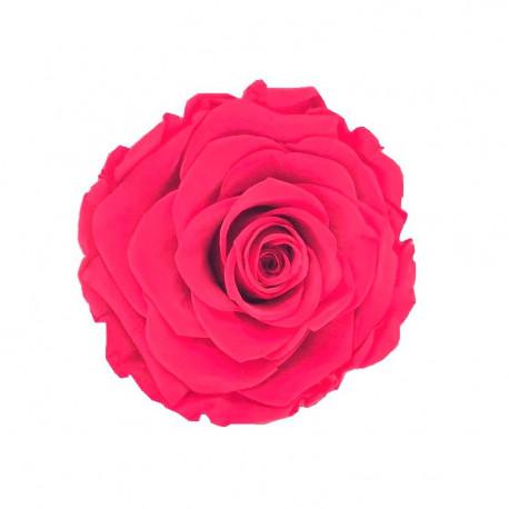 Set 3 trandafiri uni criogenati 7-8 cm