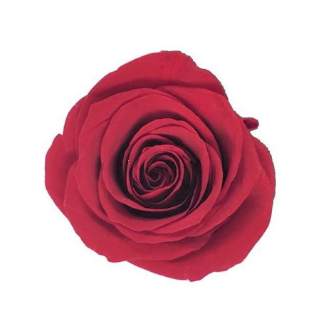 Set 5 trandafiri uni criogenati 6-7 cm