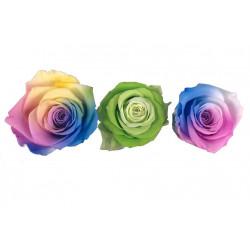 Set 6 trandafiri multicolori criogenati 5-6 cm