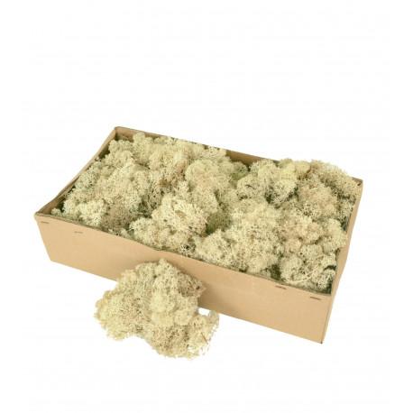 Muschi / licheni vegetali stabilizati
