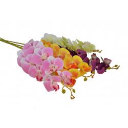 Fir de orhidee